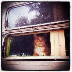 Airstream Kitty