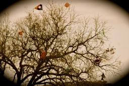 Kite Graveyard Angie Boisselle