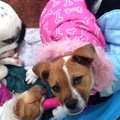 Pink Pup